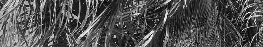 Garin Pirnia header image 3